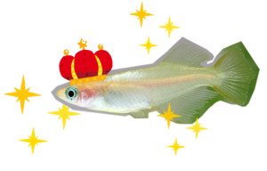 medaka02