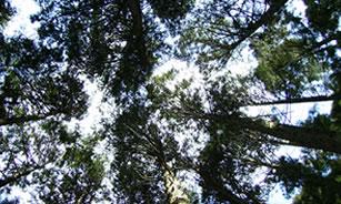 高安山自然再生定期活動